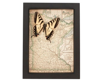 Antique Framed Map of Minnesota with Tiger Swallowtail Butterfly