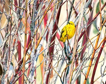 bird art Yellow Warbler original painting Minnesota nature wildlife fine art