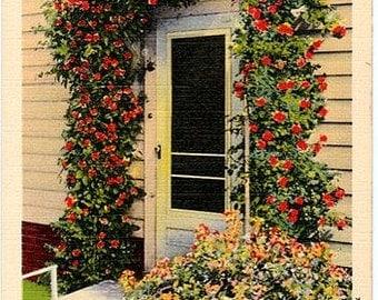 Vintage Cape Cod Postcard - The Doorway to Home (Unused)