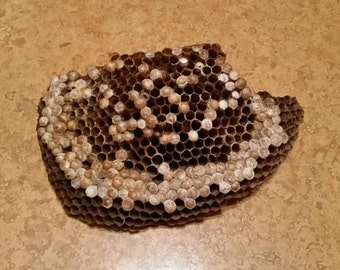 1 Huge Bee Wasp Nests or Combs for Decorating Wreaths or Floral Arrangements