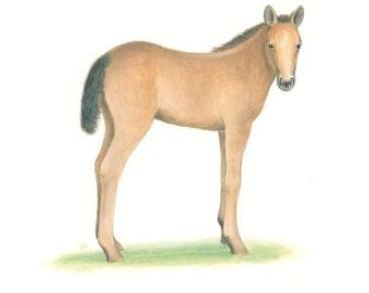"Horse PAINTING Baby Foal Art Animal Painting Watercolor Farm Art Original Fine Art 8 x 10"" by Sharon France  Nursery Art Illustration Decor"