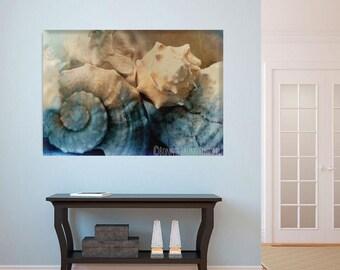 Pretty Sea Shells - fine art print, home decor, wall art, interior art, coastal art, beach decor, photo layered with texture