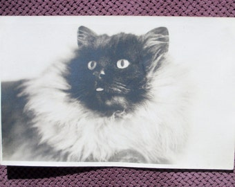 Post Card RPPC - Fluffy the Cat