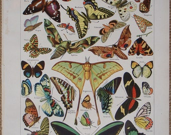 BUTTERFLIES (PAPILLONS) Vintage French original book plate by Adolphe Millot, Larousse Universel Published 1949