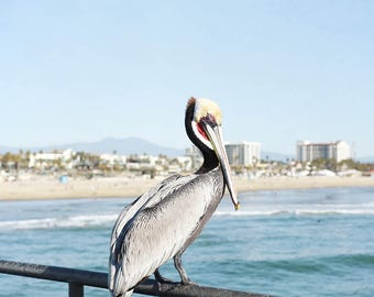 Pelican Photograph, Huntington Beach, Sea Bird, Beach Decor, Coastal Blue, Wall Art, Seaside, Beach Photography, Pacific Ocean, Pelican Art