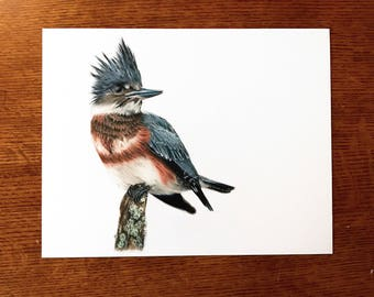 Original Belted Kingfisher Drawing