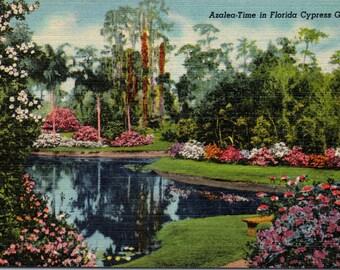 Cypress Gardens, Florida, Azaleas - Linen Postcard - Postcard - Unused (C1)