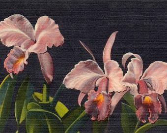 Pink Orchids vintage flower illustration Digital Download