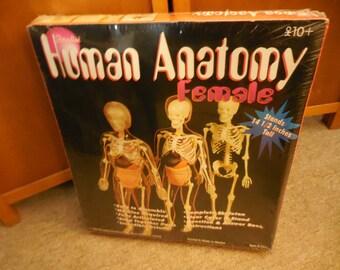 Vintage 1995 Unopened Paradise Co, Female Human Anatomy kit