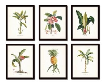 Botanical Print Set No. 13, Tropical Botanical Prints, Giclee, Pineapple, Palm Tree, Art, Beach Cottage Decor, Coastal Art, Botanical Print
