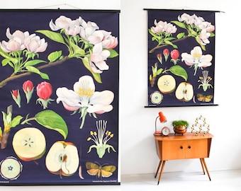 Affiche botanique école déroulant carte graphique Jung Koch Quentell usine de fleur apple allemand