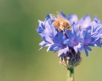 Honeybee Photograph - fine art photography, wall art and photo canvas, purple, green, bee, nature, flower, garden art