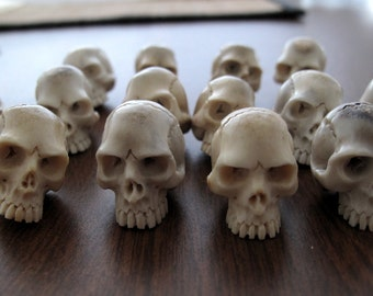 Excellent   detailed skull ,Jawless skull, Natural  shed deer antler, Jewelry making sUpplies B6657