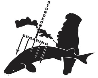Sturgeon spearing vinyl graphic