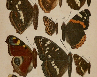 1880 Antique print of BUTTERFLIES, different species. Insects. Butterfly. Entomology. 137 years old very decorative lithograph