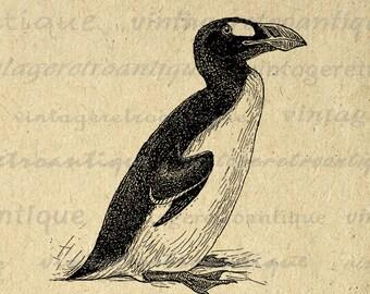 Digital Auk Bird Printable Download Graphic Illustrated Image Vintage Clip Art Jpg Png Eps Print 300dpi No.864