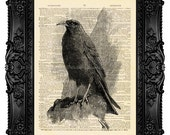 Raven Art, Crow Art Print, Nevermore, Raven Wall hanging Dictionary Art Print Vintage Upcycled Antique Book Page no.248