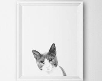 Printable Art Poster - Kitten Art, Minimalist Black White Wall Decor, Modern Home, Cat  Nursery Baby Animal Dog Photography Minimalist