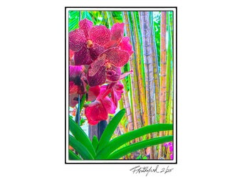 Bamboo Garden Signed and numbered limited addition of 25 prints by Floridafred. Fast and free shipping