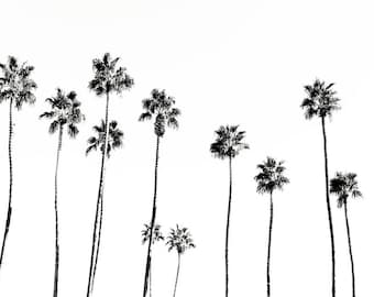 Palm Springs photography, Palm trees, tropical,home decor,  photography, black and white palms, large palm print