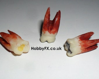 Gnarly Extracted Wisdom Teeth Prop