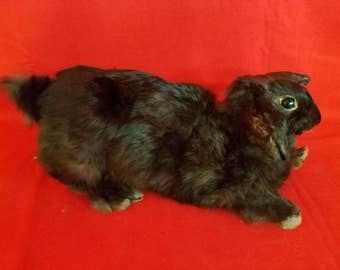Taxidermy Rabbit, bunny Peter Cottontail shelf sitter-too adorable!!!