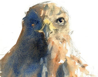 HAWK print from a watercolour painting watercolor BIRD of prey artwork birds painting animal artwork abstract size A4