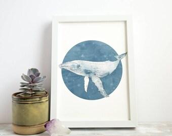 Humpback Whale   A4 Giclée Print