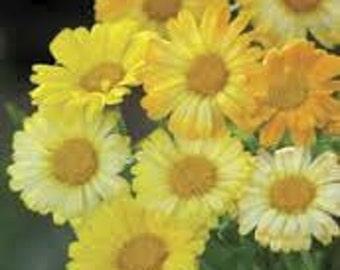 ACL) LEMONADE CALENDULA~Seed!~~~~~Blend of Sunshine!