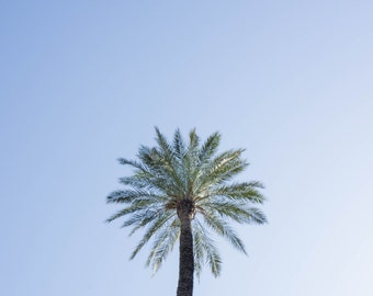 Lonely Palm Tree Photograph