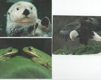 National Audubon Society, 3 Unused 1996  Postcards, California Sea Otter, Green Tree Frogs, Bald Eagle, good shape