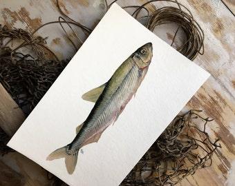 Original Ölgemälde Von Schmelz || Fisch, Kunst, Maritime Kunst, Strand,  Küche