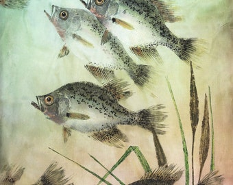 Gyotaku Print of Speckled Perch