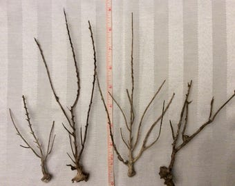 Brown Sea Fan Branches (Set of 4)