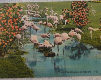 Vintage Florida Coral Flamingos Post Card
