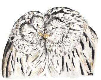 Barred Owls in Love - Fine Art Giclée Print - nursery art - Room Decor - Wall Art - owl lover