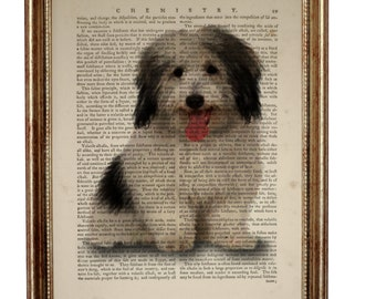 Coton De Tulear Dog Dictionary Art Print, Small White Dog Art Print, Dogs Breeds illustration Dictionary Book Page, Wall Décor