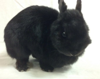 taxidermy toy rabbit
