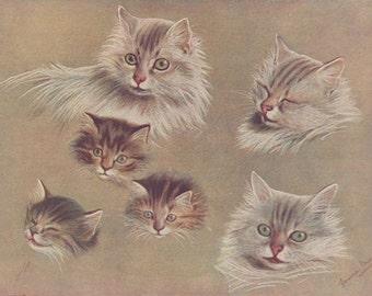 Vintage Cats and Kittens Feline Pets Animals Color Antique Cat Art Print 1908
