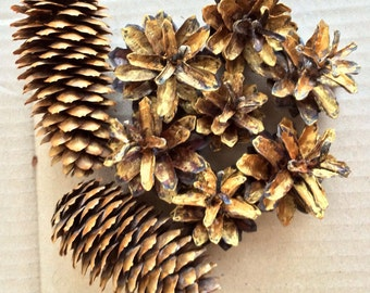 Gold Pine Cones, Spruce Cones, Natural Cones, Bulk Pine Cones