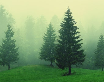 Evergreen Forest Print - Misty Forest Photo - Forest Landscape - Woods - Green Print - Digital Photo - Digital Download - Instant Download