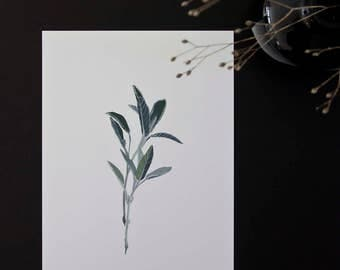 A4 Sage giclée art print - botanical illustration - gouache painting - plant - herb - sage