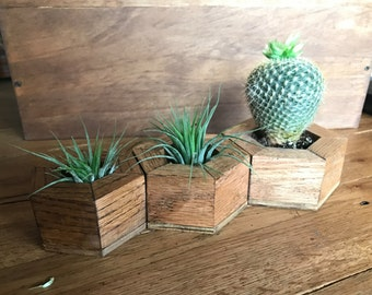 Small Hexagon Wooden Planters | Air Plant Planters