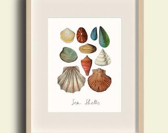 Sea Shells print, Collection of seashells illustration, Nautical art print