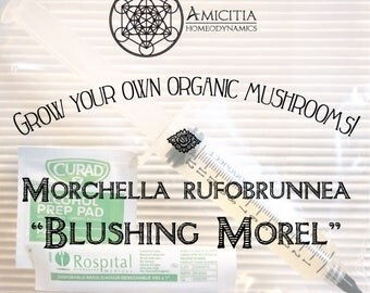 "LIVE Mycelium Liquid Culture, Morchella rufobrunnea ""Blushing Morel"" Edible 10 ml"