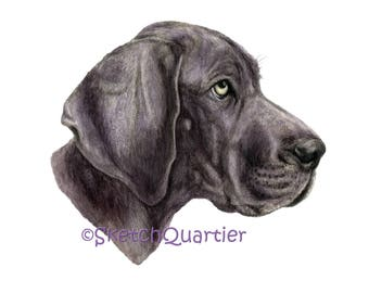 Hand painted watercolour dog portrait Weimaraner / Digital clipart for instant download with transparent background.