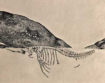 sperm whale pen and ink art