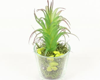 Small Artificial Plant Mix in Glass Vase, Succulent & Flowers for Office and Home #5