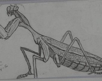 Praying Mantis in Charcoal