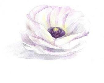 ranunculus print, Ranunculus flower watercolor, nursery Flower print, purple flower print, flower art print, purple flower watercolor